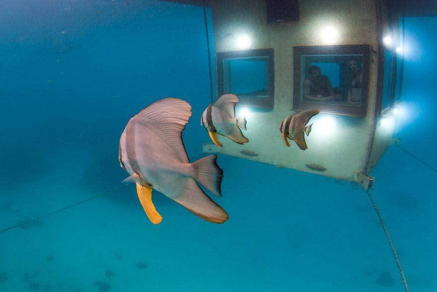 underwater-hotel-the-manta-mikael-genberg-8-ivivu