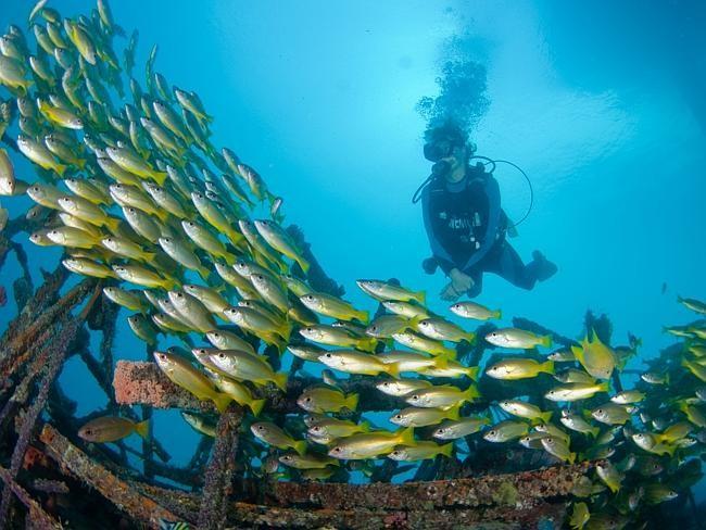 Du khách có thể thỏa sức đón gió biển từ phòng khách sạn hoặc xuống lặn biển lúc nào tùy thích.