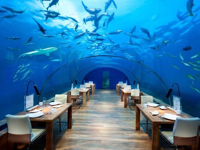 Thưởng thức đồ ăn trong lúc ngắm nhìn đàn cá bơi lội tại nhà hàng dưới nước trong khách sạn Conrad Maldives Rangali.