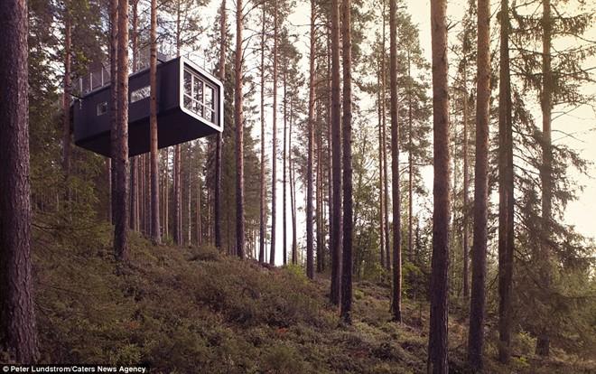 """Du khách còn có thể thuê """"Cabin"""", một phòng nghỉ lạ lùng khác trong khu rừng này. Trang web của Treehotel phòng nghỉ này """"như một con nhộng, một thực thể xa lạ giữa những thân cây"""", có giường đôi, phòng tắm và hiên nhà."""
